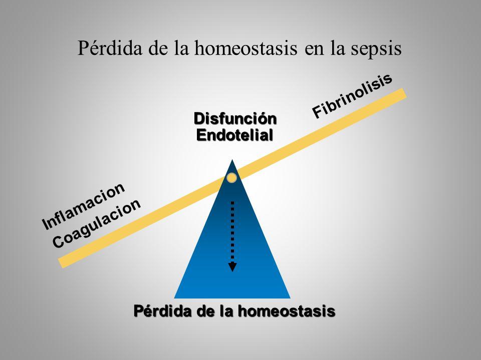 Pérdida de la homeostasis en la sepsis Fibrinolisis Disfunción Endotelial Inflamacion Coagulacion Pérdida de la homeostasis