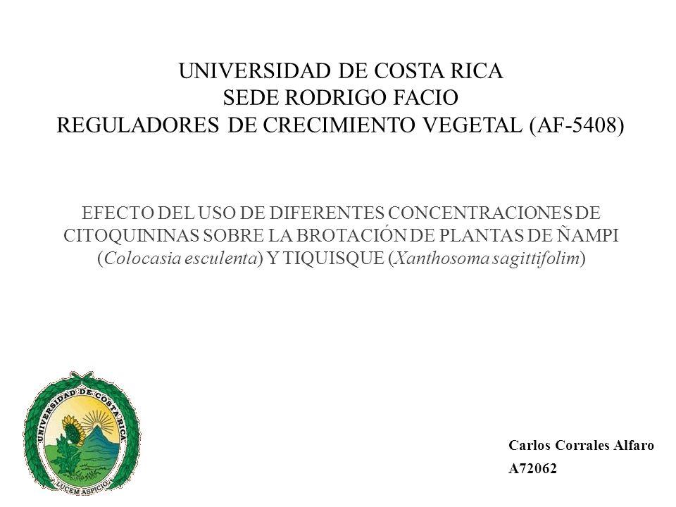 UNIVERSIDAD DE COSTA RICA SEDE RODRIGO FACIO REGULADORES DE CRECIMIENTO VEGETAL (AF-5408) EFECTO DEL USO DE DIFERENTES CONCENTRACIONES DE CITOQUININAS