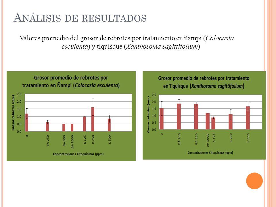 A NÁLISIS DE RESULTADOS Valores promedio del grosor de rebrotes por tratamiento en ñampi (Colocasia esculenta) y tiquisque (Xanthosoma sagittifolium)