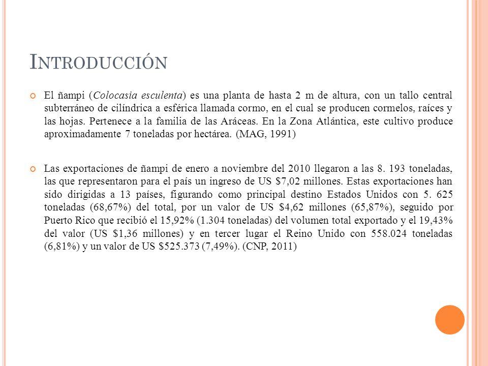 Según Morales (2007), el tiquisque pertenece a la familia de las Aráceas, es considerada una hierba perenne compuesta por un tallo subterráneo o cormo con un meristema apical que forma una corona de pocas hojas y produce cormelos que es la parte comercial.