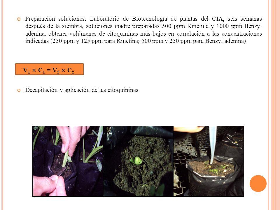 Preparación soluciones: Laboratorio de Biotecnología de plantas del CIA, seis semanas después de la siembra, soluciones madre preparadas 500 ppm Kinet