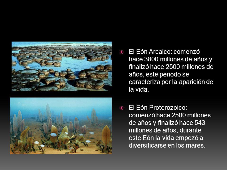 El Eón Arcaico: comenzó hace 3800 millones de años y finalizó hace 2500 millones de años, este periodo se caracteriza por la aparición de la vida. El