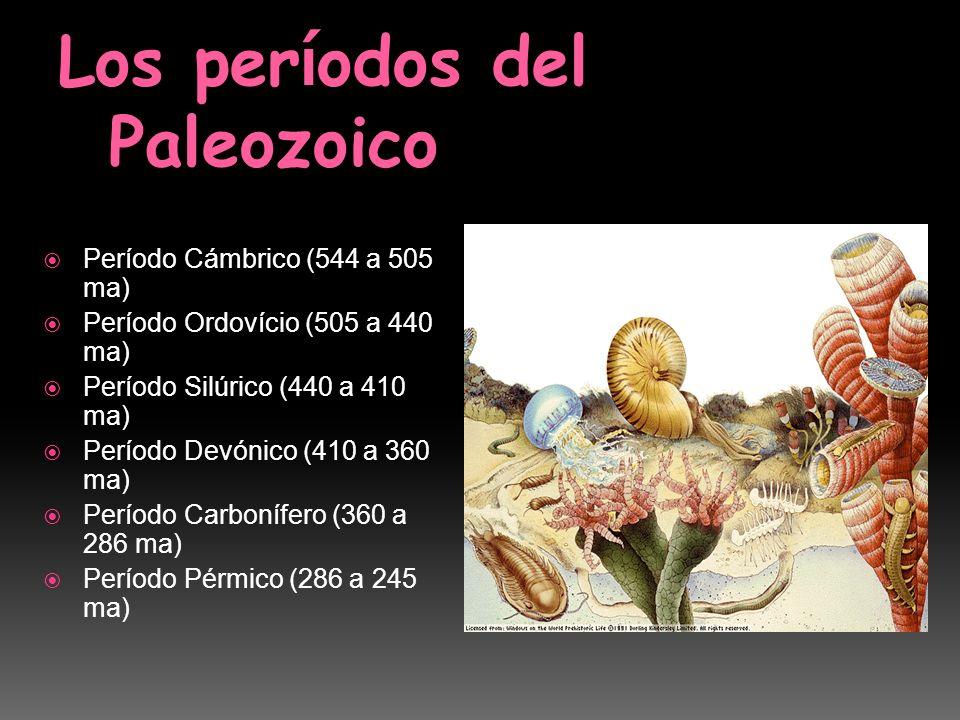 Período Cámbrico (544 a 505 ma) Período Ordovício (505 a 440 ma) Período Silúrico (440 a 410 ma) Período Devónico (410 a 360 ma) Período Carbonífero (