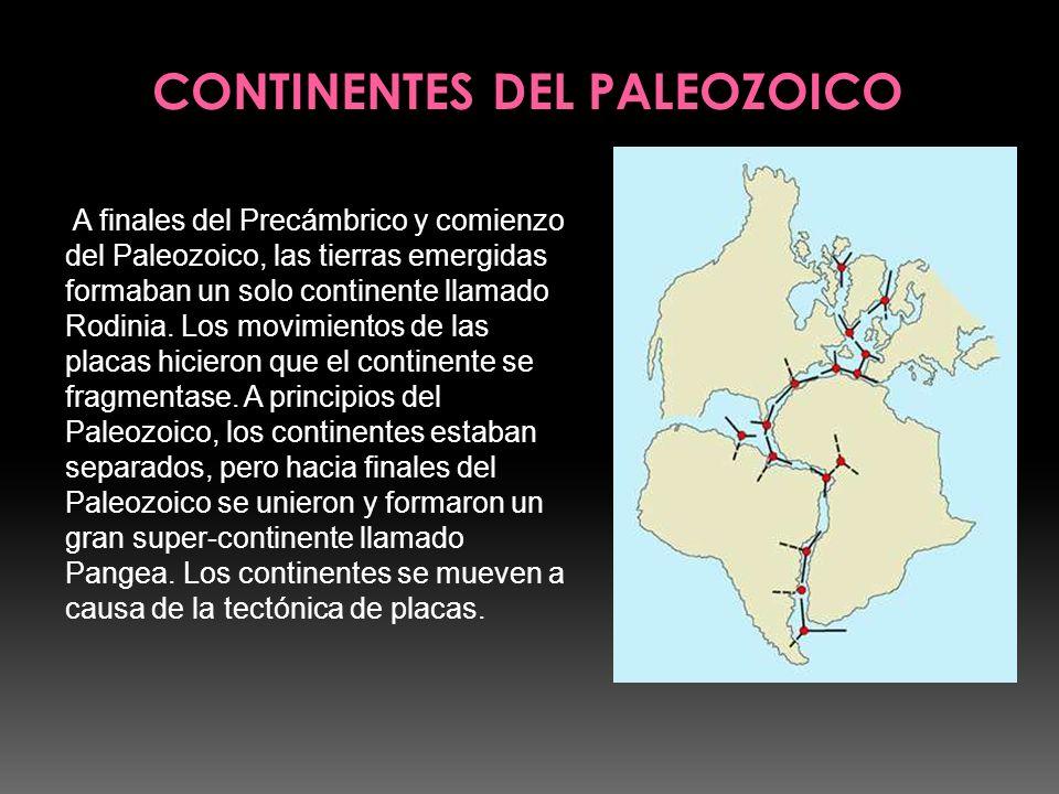 A finales del Precámbrico y comienzo del Paleozoico, las tierras emergidas formaban un solo continente llamado Rodinia. Los movimientos de las placas