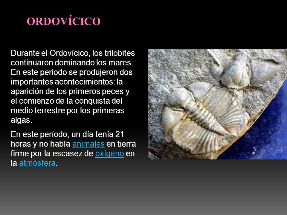 ORDOVÍCICO Durante el Ordovícico, los trilobites continuaron dominando los mares. En este periodo se produjeron dos importantes acontecimientos: la ap