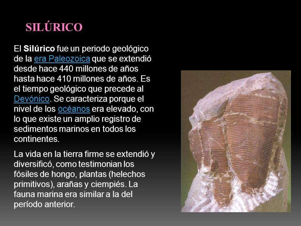 SILÚRICO El Silúrico fue un periodo geológico de la era Paleozoica que se extendió desde hace 440 millones de años hasta hace 410 millones de años. Es