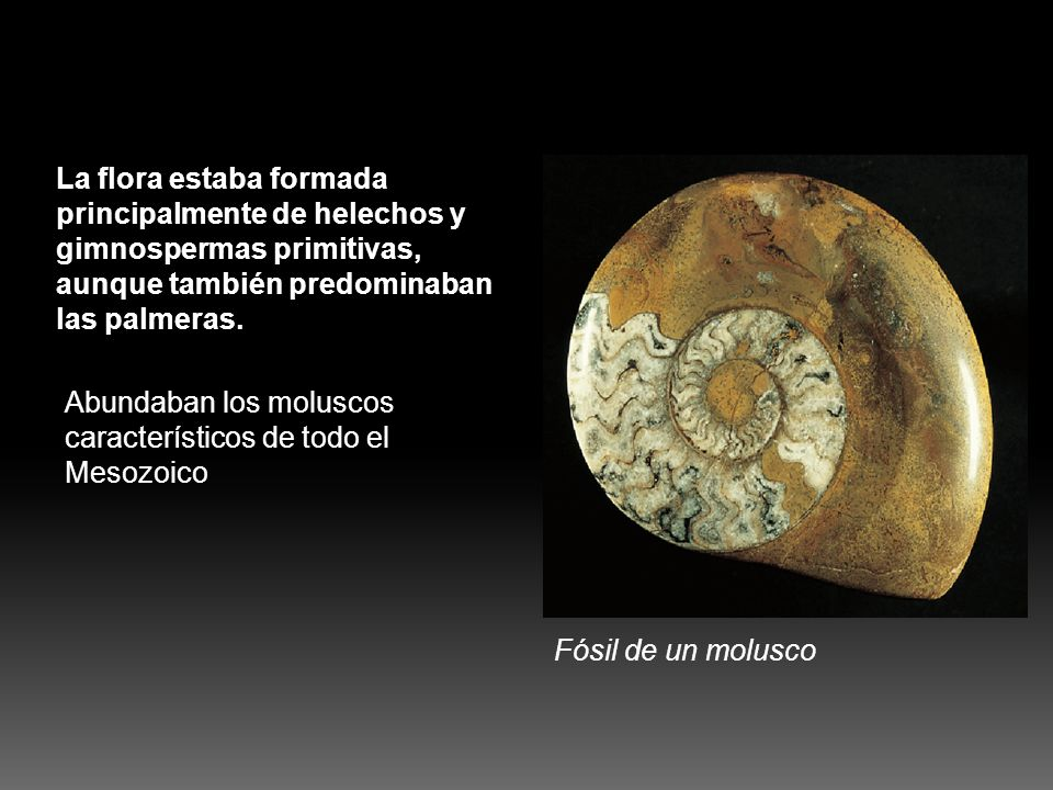 La flora estaba formada principalmente de helechos y gimnospermas primitivas, aunque también predominaban las palmeras. Abundaban los moluscos caracte