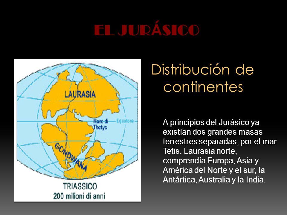 Distribución de continentes A principios del Jurásico ya existían dos grandes masas terrestres separadas, por el mar Tetis. Laurasia norte, comprendía
