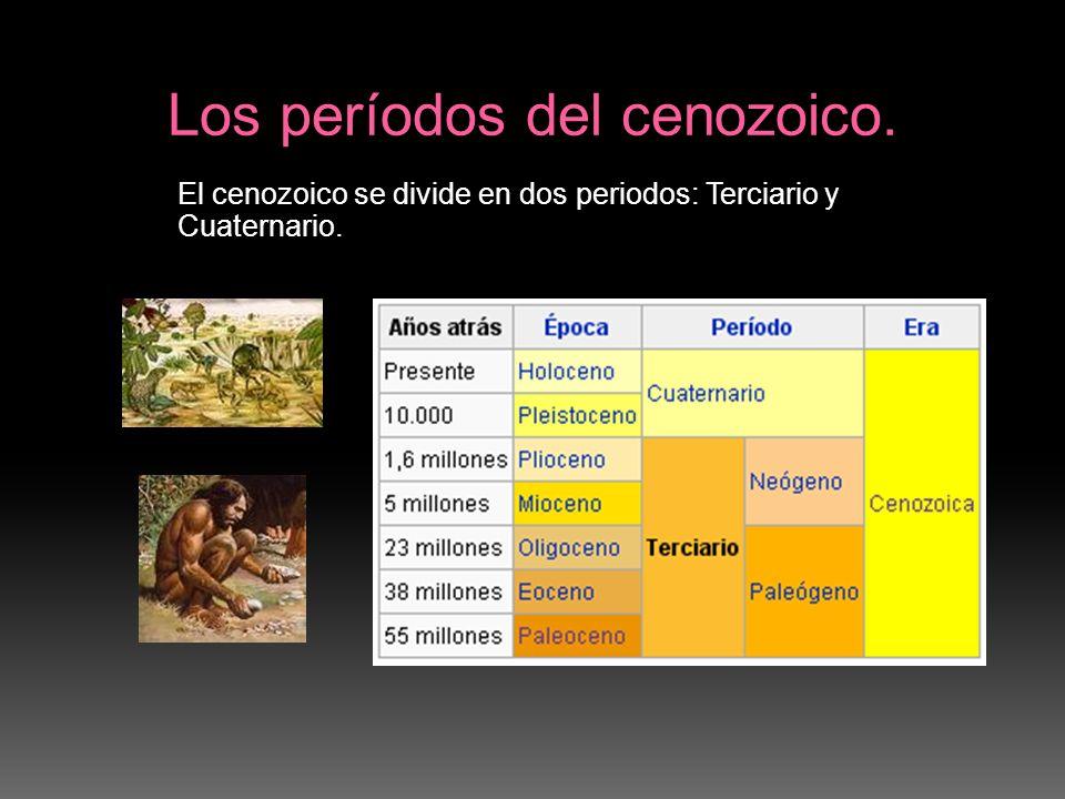 El cenozoico se divide en dos periodos: Terciario y Cuaternario.