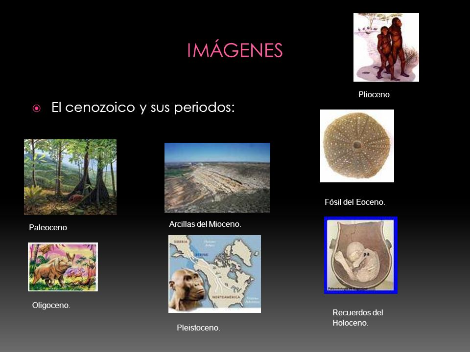 El cenozoico y sus periodos: Paleoceno Arcillas del Mioceno. Plioceno. Fósil del Eoceno. Oligoceno. Pleistoceno. Recuerdos del Holoceno.