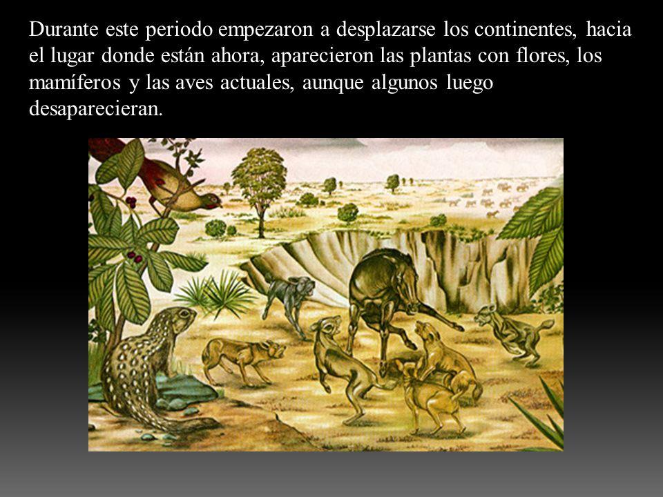 Durante este periodo empezaron a desplazarse los continentes, hacia el lugar donde están ahora, aparecieron las plantas con flores, los mamíferos y la