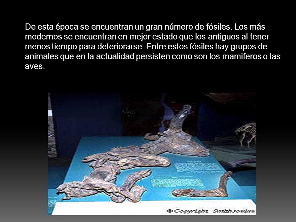 De esta época se encuentran un gran número de fósiles. Los más modernos se encuentran en mejor estado que los antiguos al tener menos tiempo para dete