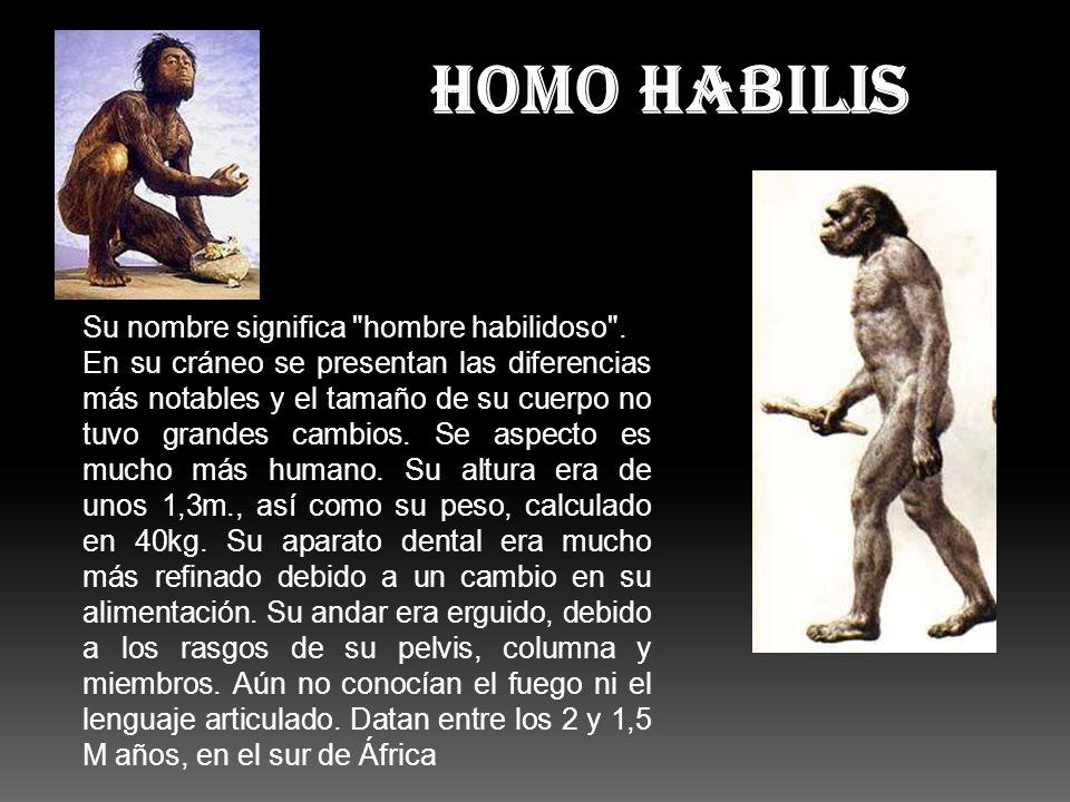 HOMO HABILIS Su nombre significa