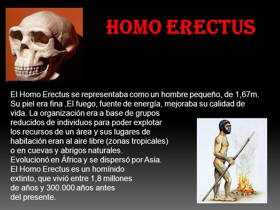 HOMO ERECTUS El Homo Erectus se representaba como un hombre pequeño, de 1,67m. Su piel era fina.El fuego, fuente de energía, mejoraba su calidad de vi