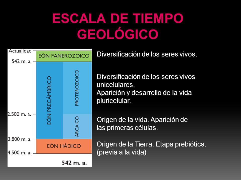 En el Triásico el clima era seco y caluroso, lo que originaba desiertos.
