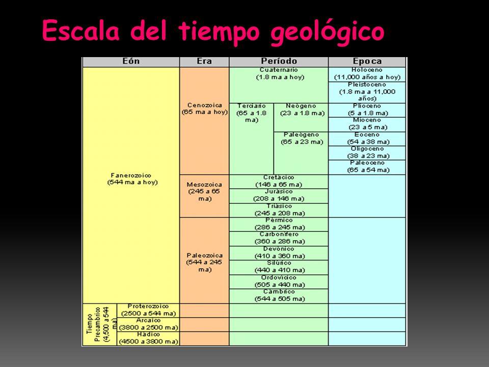 El pleistoceno es la época en la que vivieron animales prehistóricos como el mamut, el rinoceronte lanudo, y el tigre de dientes de sable.