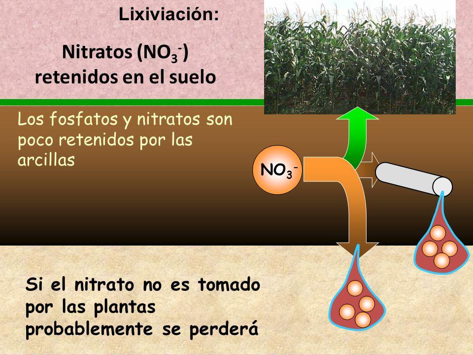 Nitratos (NO 3 - ) retenidos en el suelo Si el nitrato no es tomado por las plantas probablemente se perderá Los fosfatos y nitratos son poco retenido