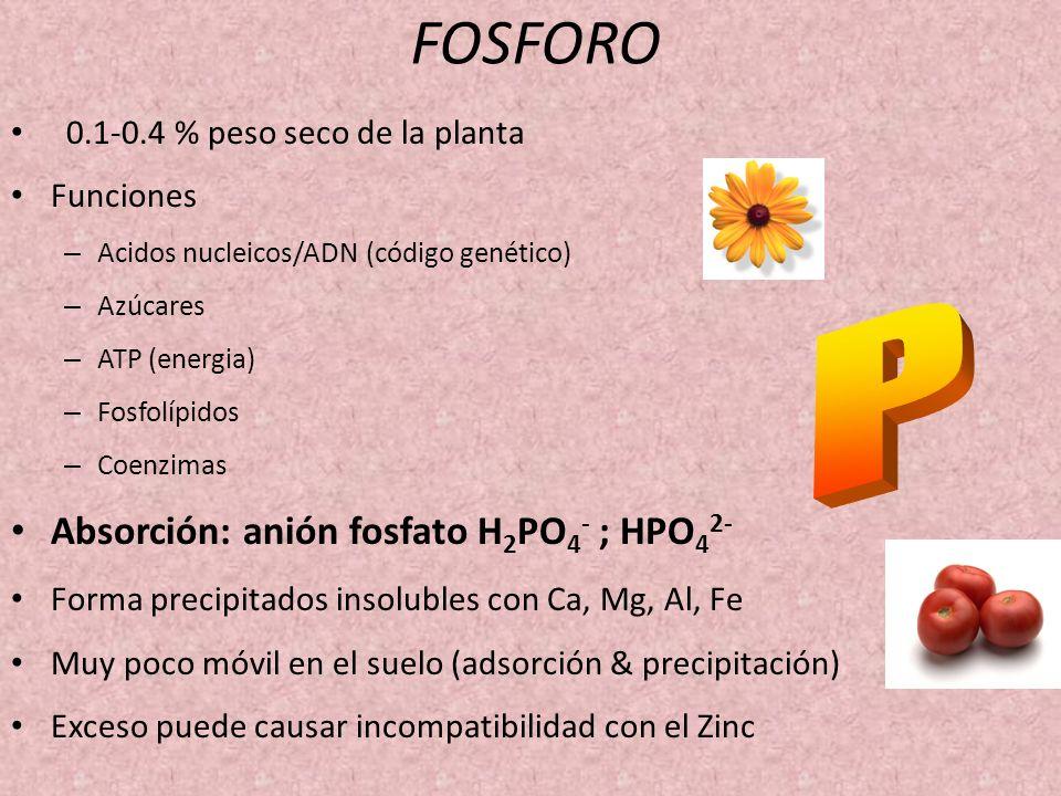 FOSFORO 0.1-0.4 % peso seco de la planta Funciones – Acidos nucleicos/ADN (código genético) – Azúcares – ATP (energia) – Fosfolípidos – Coenzimas Abso