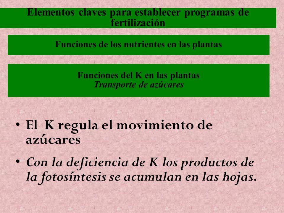 Funciones del K en las plantas Transporte de azúcares El K regula el movimiento de azúcares Con la deficiencia de K los productos de la fotosíntesis s