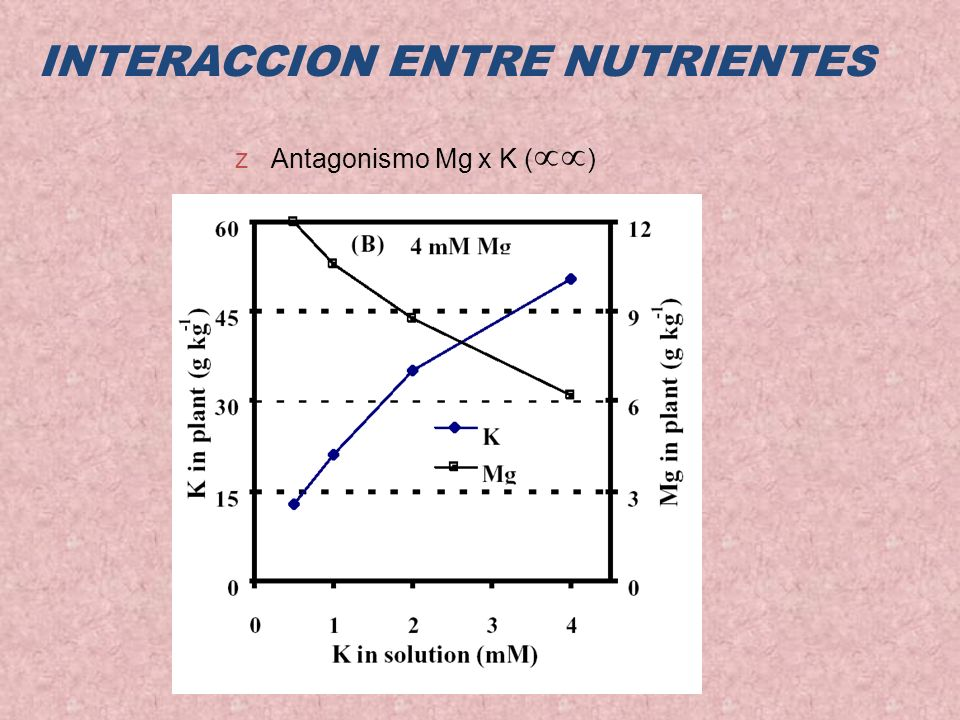 INTERACCION ENTRE NUTRIENTES zAntagonismo Mg x K ( )