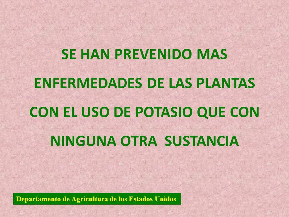SE HAN PREVENIDO MAS ENFERMEDADES DE LAS PLANTAS CON EL USO DE POTASIO QUE CON NINGUNA OTRA SUSTANCIA Departamento de Agricultura de los Estados Unido