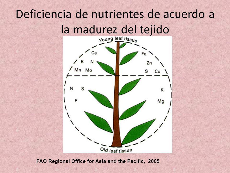 Deficiencia de nutrientes de acuerdo a la madurez del tejido FAO Regional Office for Asia and the Pacific, 2005
