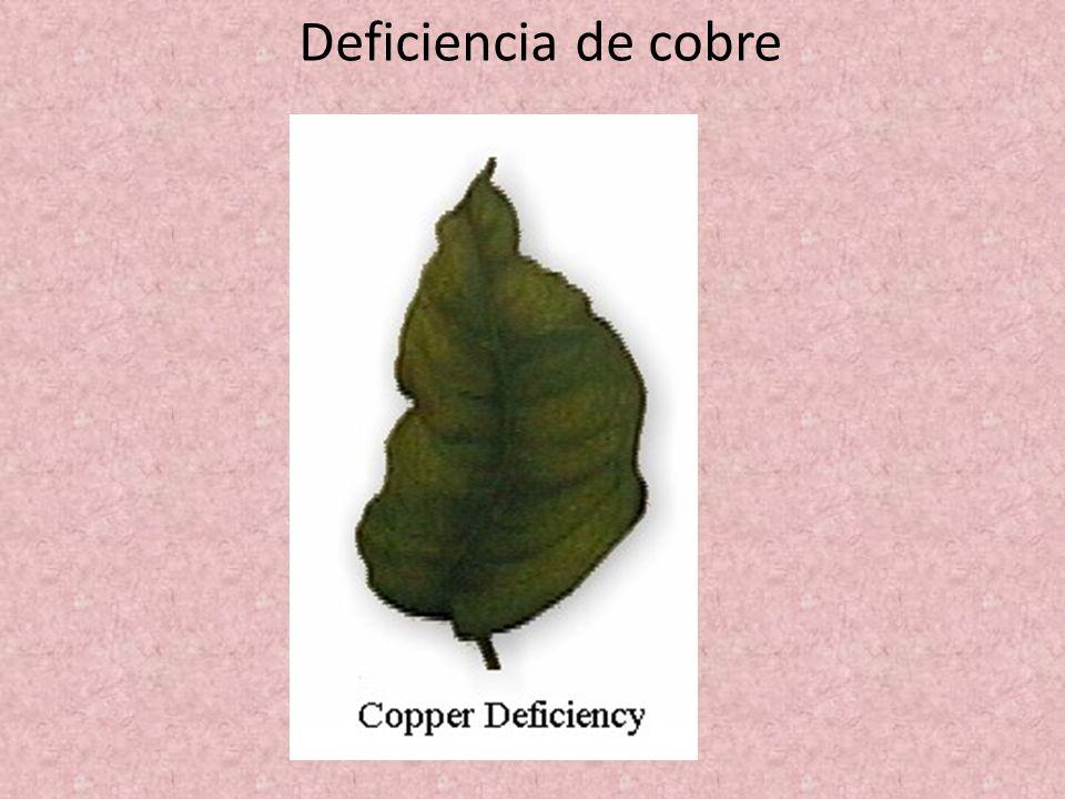 Deficiencia de cobre