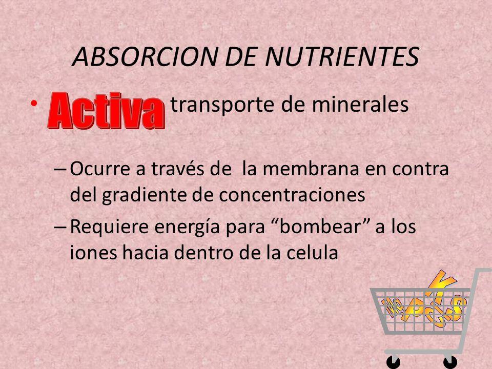 transporte de minerales – Ocurre a través de la membrana en contra del gradiente de concentraciones – Requiere energía para bombear a los iones hacia