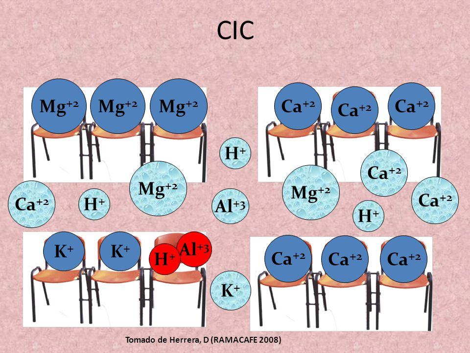 CIC ------ --- --- Ca +2 Mg +2 Ca +2 K+K+ Mg +2 Al +3 Ca +2 H+H+ Mg +2 Al +3 Ca +2 K+K+ H+H+ H+H+ H+H+ K+K+ Mg +2 Ca +2 Mg +2 Tomado de Herrera, D (RA