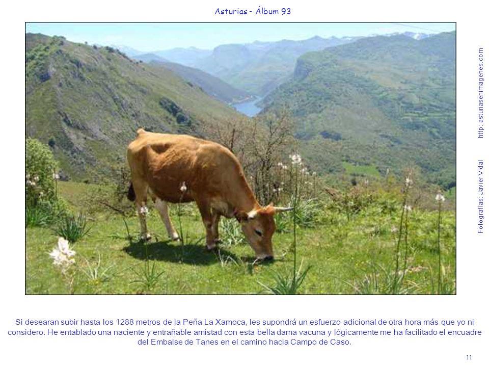 11 Asturias - Álbum 93 Fotografías: Javier Vidal http: asturiasenimagenes.com Si desearan subir hasta los 1288 metros de la Peña La Xamoca, les supondrá un esfuerzo adicional de otra hora más que yo ni considero.