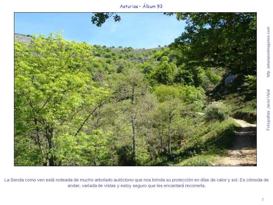 5 Asturias - Álbum 93 Fotografías: Javier Vidal http: asturiasenimagenes.com La Senda como ven está rodeada de mucho arbolado autóctono que nos brinda su protección en días de calor y sol.
