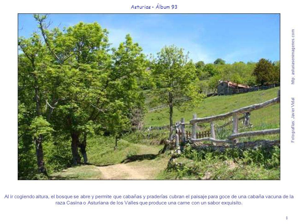 8 Asturias - Álbum 93 Fotografías: Javier Vidal http: asturiasenimagenes.com Al ir cogiendo altura, el bosque se abre y permite que cabañas y pradería