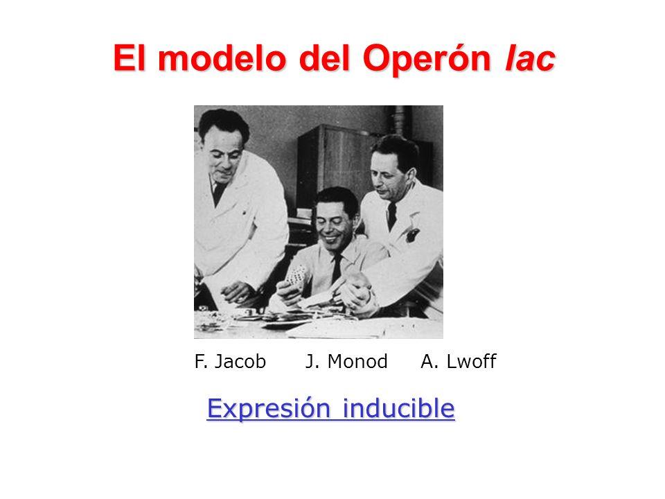 El modelo del Operón lac F. Jacob J. Monod A. Lwoff Expresión inducible