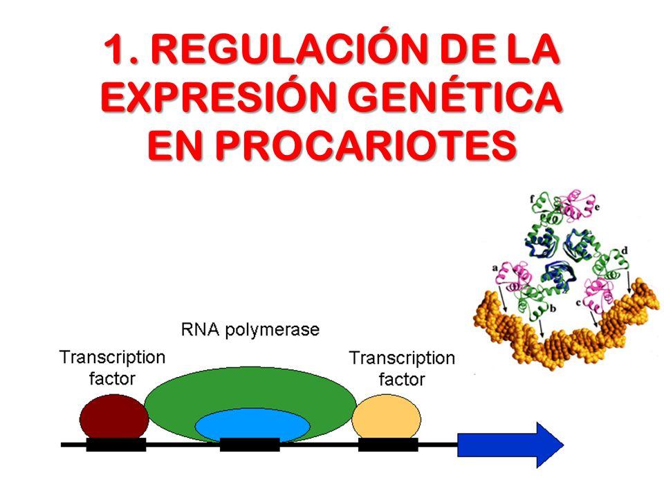 La regulación de la expresión de los genes se establece de la necesidad de controlar la actividad de las enzimas o de las proteínas en general, en momentos precisos de la vida de la célula REGULACIÓN DE LA ACTIVIDAD ENZIMÁTICA CELULAR ALOSTERISMO POSITIVO O NEGATIVO REGULACIÓN COVALENTE a) MODIFICACIONES POST- TRADUCCIONALES b) ZIMÓGENOS POR PRODUCTO, RETROALIMENTACIÓN ISOENZIMAS CANTIDAD DE ENZIMA SÍNTESIS DEGRADACIÓN