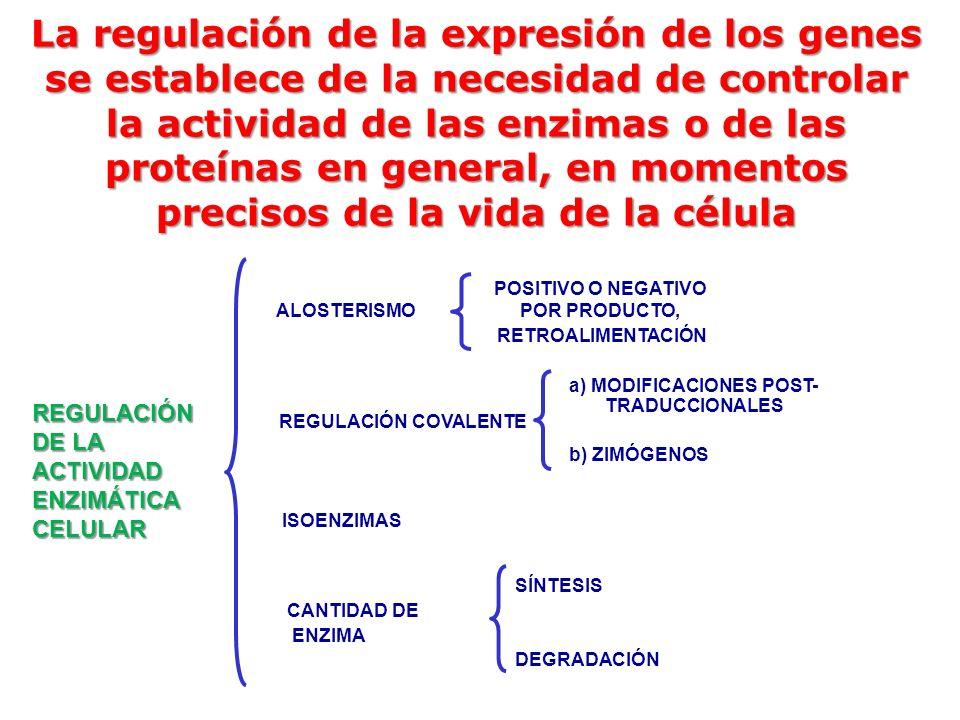 La regulación de la expresión de los genes se establece de la necesidad de controlar la actividad de las enzimas o de las proteínas en general, en mom