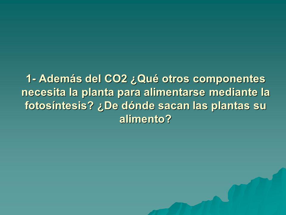 1- Además del CO2 ¿Qué otros componentes necesita la planta para alimentarse mediante la fotosíntesis? ¿De dónde sacan las plantas su alimento?