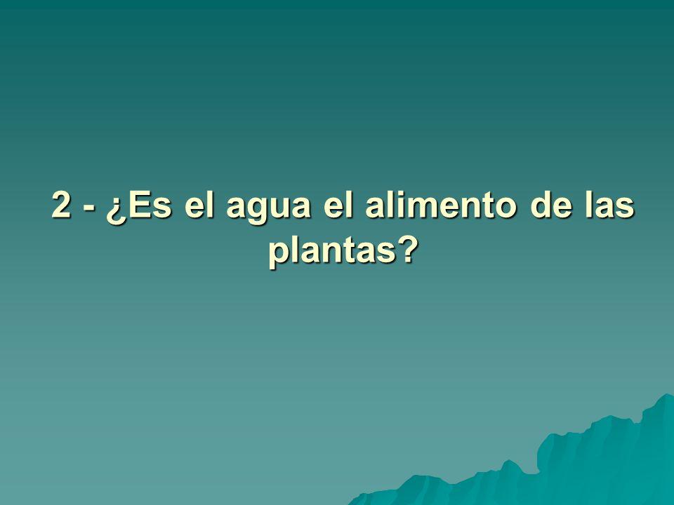 2 - ¿Es el agua el alimento de las plantas?