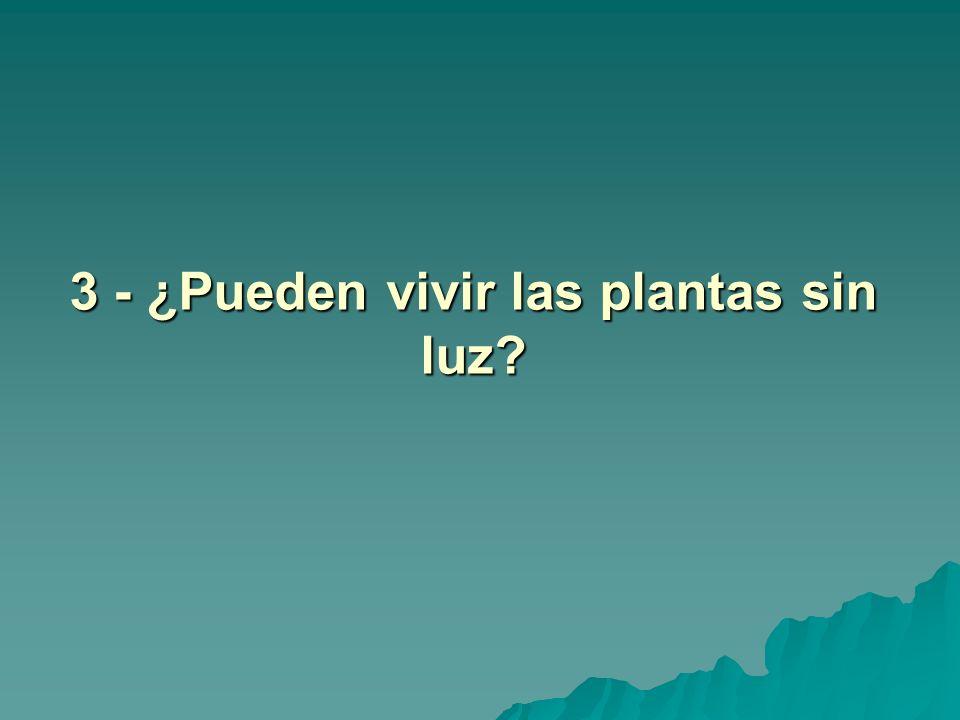 3 - ¿Pueden vivir las plantas sin luz?