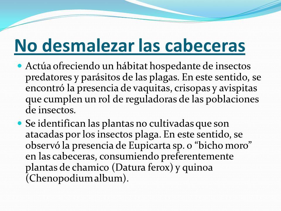 No desmalezar las cabeceras Actúa ofreciendo un hábitat hospedante de insectos predatores y parásitos de las plagas. En este sentido, se encontró la p