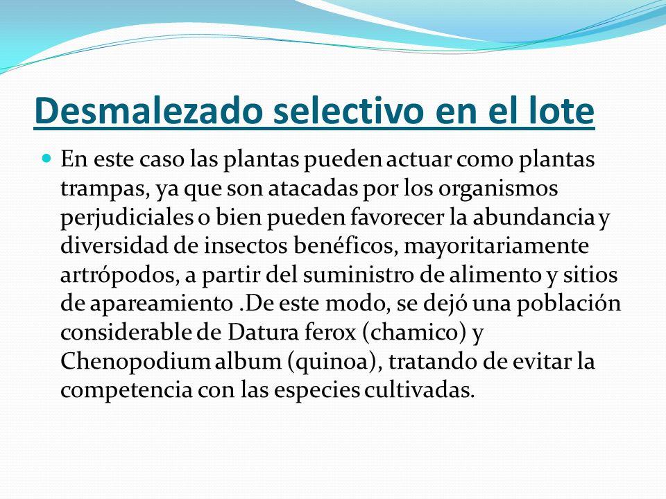 Desmalezado selectivo en el lote En este caso las plantas pueden actuar como plantas trampas, ya que son atacadas por los organismos perjudiciales o b