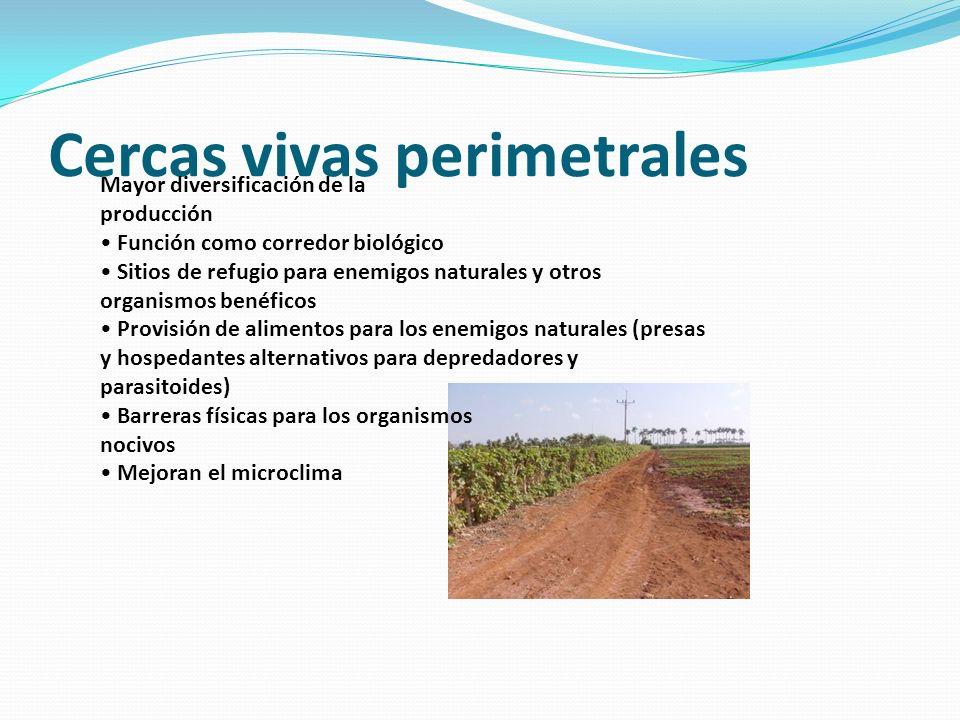 Cercas vivas perimetrales Mayor diversificación de la producción Función como corredor biológico Sitios de refugio para enemigos naturales y otros org