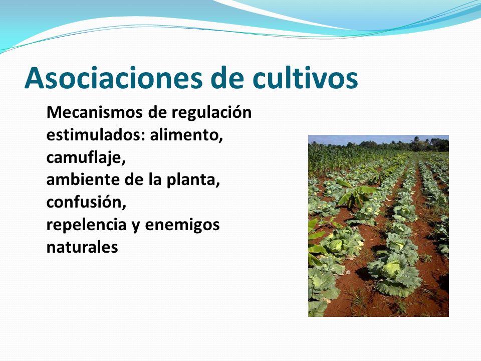 Asociaciones de cultivos Mecanismos de regulación estimulados: alimento, camuflaje, ambiente de la planta, confusión, repelencia y enemigos naturales