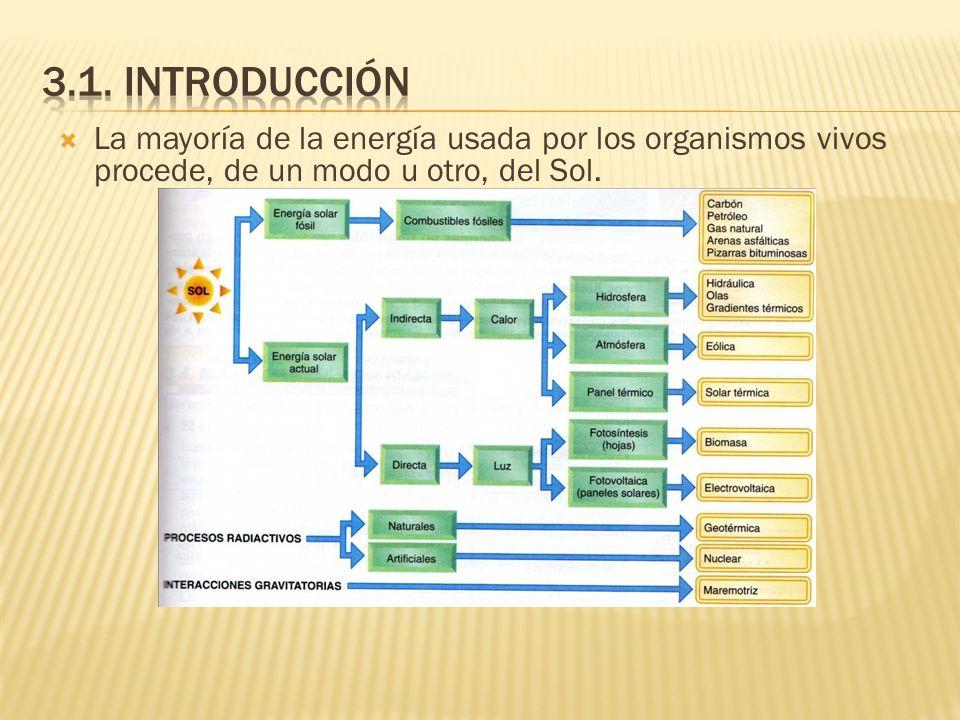 La mayoría de la energía usada por los organismos vivos procede, de un modo u otro, del Sol.