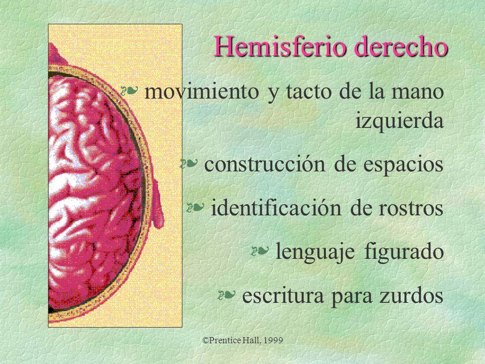 ©Prentice Hall, 1999 Hemisferio derecho § movimiento y tacto de la mano izquierda § construcción de espacios § identificación de rostros § lenguaje fi