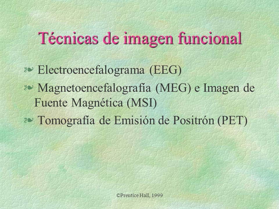©Prentice Hall, 1999 Técnicas de imagen funcional § Electroencefalograma (EEG) § Magnetoencefalografía (MEG) e Imagen de Fuente Magnética (MSI) § Tomo