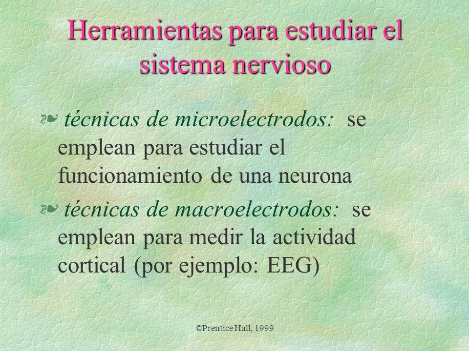 ©Prentice Hall, 1999 Herramientas para estudiar el sistema nervioso § imagen estructural: estudia las estructuras del cerebro § imagen funcional: estudia el funcionamiento del sistema nervioso