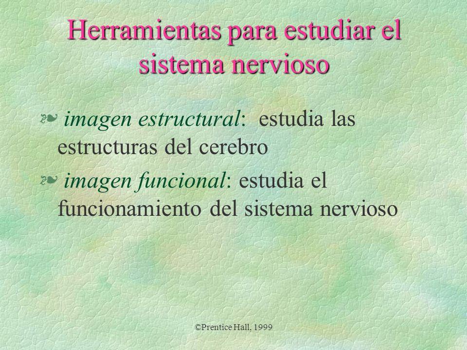 ©Prentice Hall, 1999 Herramientas para estudiar el sistema nervioso § imagen estructural: estudia las estructuras del cerebro § imagen funcional: estu