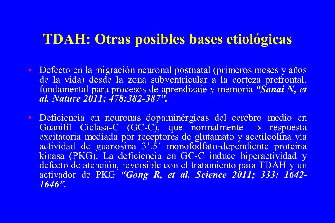 TDAH: Otras posibles bases etiológicas Defecto en la migración neuronal postnatal (primeros meses y años de la vida) desde la zona subventricular a la
