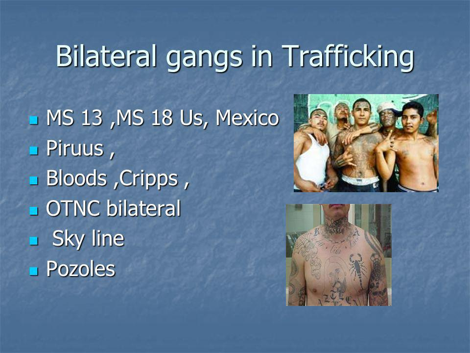 Bilateral gangs in Trafficking MS 13,MS 18 Us, Mexico MS 13,MS 18 Us, Mexico Piruus, Piruus, Bloods,Cripps, Bloods,Cripps, OTNC bilateral OTNC bilateral Sky line Sky line Pozoles Pozoles