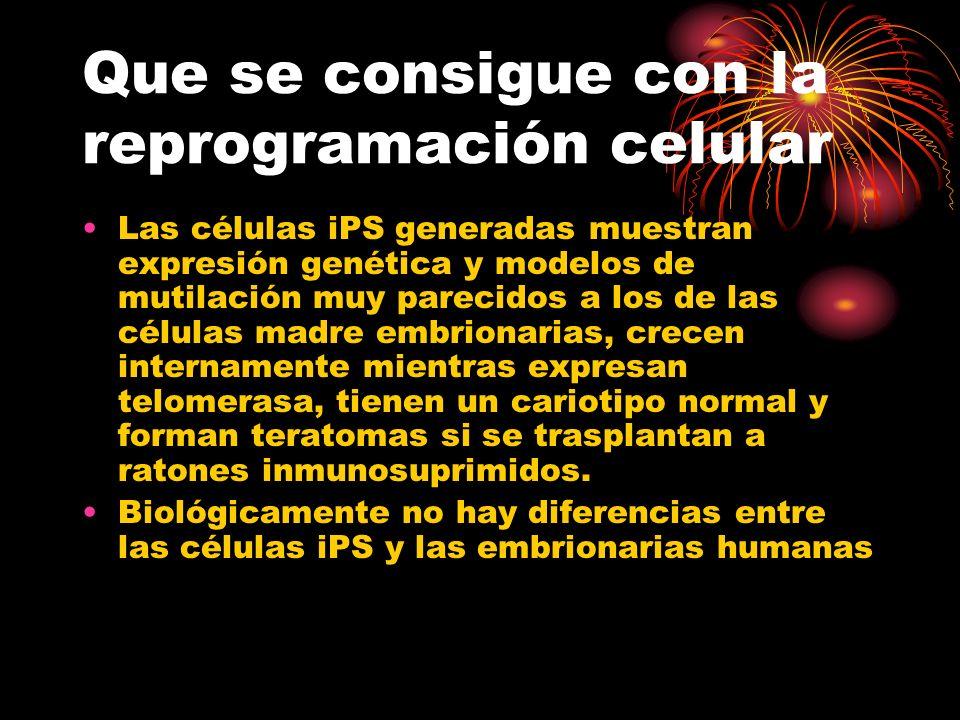 Que se consigue con la reprogramación celular Las células iPS generadas muestran expresión genética y modelos de mutilación muy parecidos a los de las